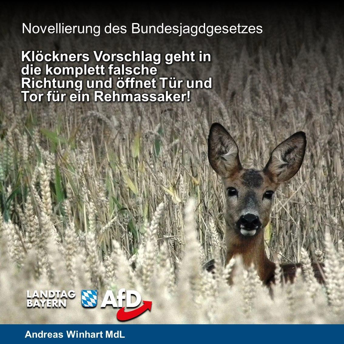 """AfD steht für """"Wald mit Wild"""" – Gesetzesänderungen gehen in die falsche Richtung"""